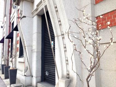 flowingKARASUMA前の梅の木